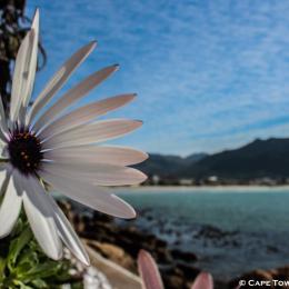 FHBeach - Jagers Walk - Cape Town's Deep South - Bev Simpson